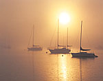 Sailboats in North Cove with Sun Shining through Early Morning Ground Fog