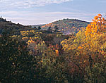Forested Hills in Fall