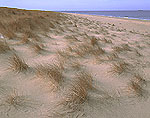 Grasses, Dunes and Ocean Edge, Race Point Beach, Cape Cod National Seashore