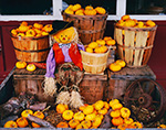 Fall Harvest: Baskets of Mini-Pumpkins with Scarecrow