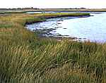 Salt Marsh off Intercoastal Waterway, Great Sound, Stone Harbor, NJ