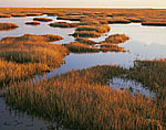 Great  Bay Boulevard Salt Marsh in Fall and Morning Light, Barnegat Bay Watershed, Little Egg Harbor Township, NJ