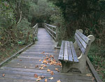 Park Bench and Boardwalk