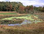 Wetlands and Farmland in Fall