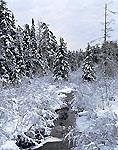 Rickerson Brook, Adirondack Park