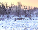 Frozen and Snowed-in Marsh, Tully Lake, Finger Lakes Region
