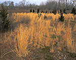 Sunburnt Grasses