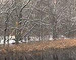 Light Snow, Pond and Woodland Edge