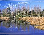 Prairie Reflections