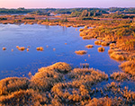 Marsh and Pond