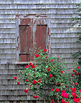 Window and Roses, Atwood Higgins House Property, Cape Cod National Seashore