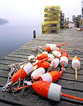 Lobster Buoys and Traps, Bass Harbor