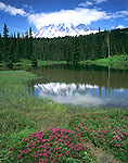 Mt. Rainier, Red Heather, and Reflection Lakes