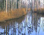 Jackeys Creek, Tributary of Brunswick River