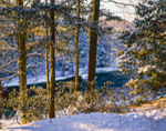 Early Morning Light in Woodlands along Millers River after Light Snowfall, Bearsden Conservation Area, Athol, MA