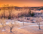 Early Morning Light Shines on Rural Fruit Orchard after Ice Storm, Royalston, MA