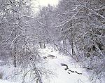 Frozen Stream through Hardwood Forest after Fresh Snowfall