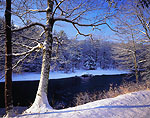 Clear Day on the Millers river with Red Oak after Snowstorm