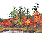 Wolf Brook with Marsh and Swamp in Fall