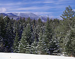 Green Mountains and Conifers in Winter