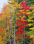 Fall Woodlands