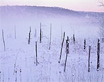 Wetlands and Ground Fog in Winter