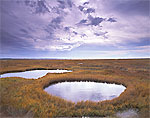 Salt Marsh and Pools, Lieutenant Island Area, Mass. Audubon Sanctuary