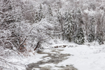 Woodlands and Rake Branch after Light Snowfall, Green Mountain National Forest, Somerset, VT