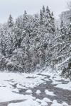 Woodlands and Deerfield River after Light Snowfall, Green Mountain National Forest, Somerset, VT