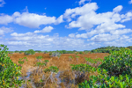 Red Mangroves and Wetlands Prairie near Paurotis Pond, Everglades National Park, FL