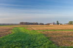 Early Morning Light Shines on Old Cornfield on Rural Farm, Putnam County, near Cloverdale, IN