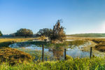 Early Morning Fog over Cow Pond and Rural Farmland near Highlands Hammock State Park, Hardee County, Zolfo Springs, FL