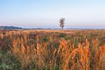 Early Morning Light Shines on Solitary Tree in Rural Farmland, near Highlands Hammock State Park, Hardee County, Zolfo Springs, FL