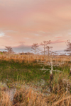 Sunset over Dwarf Cypress (Pond Cypress) and Wetland Prairie in Pa-hay-okee Area, Everglades National Park, FL