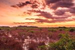 Predawn over Red Mangroves and Wetlands Prairie near Paurotis Pond, Everglades National Park, FL
