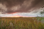 Threatening Clouds at Sunset over Dwarf Cypress (Pond Cypress) and Wetland Prairie, Pa-hay-okee Area, Everglades National Park, FL