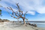 Driftwood (Live Oak Tree) on Driftwood Beach, Jekyll Island, GA