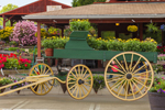Decorative Old Wagon Filled With Spring Plants at Atkins Farm, Amherst, MA