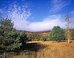 Field of Dry Grasses and Pines in Adirondack Park