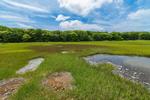 Salt Marsh and Tidal Pools at Barn Island Wildlife Management Area, Stonington, CT