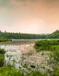 Sunset over Wetlands at Hale Pond, T2R10 WELS, ME