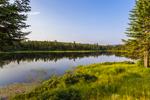 Beaver Pond in Early Morning Light, Rangeley Lakes Region, Township D, ME