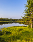 Beaver Pond in Early Morning Light, Rangeley Lakes Region, Township D, ME