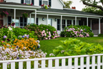 Colorful Flower Gardens in Front Yard of Edgartown Home, Martha's Vineyard, Edgartown, MA