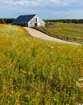 Wildflowers and Cedar-shingled Barn with American Flag and Split-rail Fence, Martha's Vineyard, Edgartown, MA