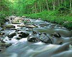 Willard Brook in Spring, Willard Brook State Forest