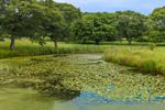 Lily Pond on Turtle Brook Farm, Martha's Vineyard, Chilmark, MA