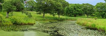 Lily Pond on Turtle Brook Farm, Martha's Vineyard, Chilmark, MA