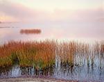 Rushes and Morning Fog on Lake Pleasant, Adirondack Mountains