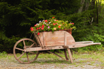 Small Wooden Cart Filled with Impatiens Flowers, Mount Desert Island, Bar Harbor, ME